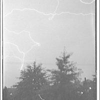 Lightning. Lightning over trees