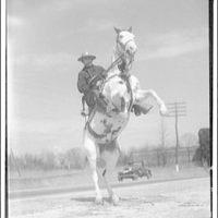 Maryland mounted police. Mounted policeman II