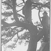 Miscellaneous subjects. Two men climbing a tree