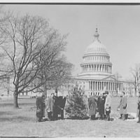 Planting of tree on U.S. Capitol grounds. Tree planting IV