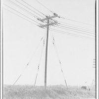 Potomac Electric Power Co. Power line near Washington Grove I
