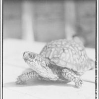 Reptiles. Portrait of turtle