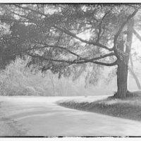 Rock Creek Park. Roadway in Rock Creek Park with large tree II
