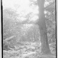 Rock Creek Park. Wooded area in Rock Creek Park