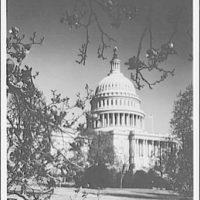 U.S. Capitol exteriors. U.S. Capitol dome and magnolia I