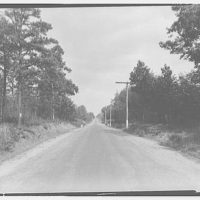 Waldorf, Maryland and vicinity. Road lined with trees I