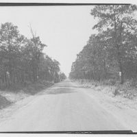 Waldorf, Maryland and vicinity. Road lined with trees II