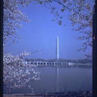 Washington Monument. Views of Washington Monument, cherry blossoms and Tidal Basin XXIII