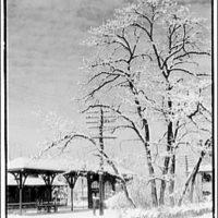 Winter scenes. Forest Glen railroad station