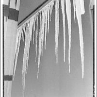 Winter scenes. Icicles I