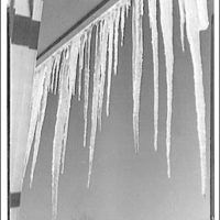 Winter scenes. Icicles II