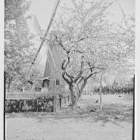 Home Sweet Home, residence in East Hampton, Long Island. Apple tree and windmill