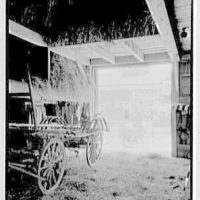 Charles G. Meyer, residence on Bell Ave., Bayside, Long Island. Hay barn, looking out
