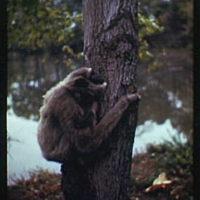 Animal portraits. Monkey climbing tree