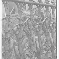New Orleans photographs. 915 Royal St., detail of gates