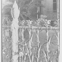 New Orleans photographs. Corn fence, Prytania and 4th St. IV