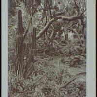 Palm Beach : architecture and gardens. Peter H.B. Frelinghuysen residence, El Burro Way, rock garden