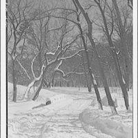 Winter scenes. View in Rock Creek Park showing roadway near zoo