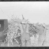 Farm near Ralls,Texas,TX,Farm Security Administration,FSA,Crosby County,1939,10