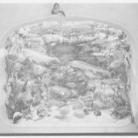 World's Fair, Florida exhibit. Undersea diorama