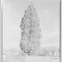 Electric Institute of Washington. Christmas tree II