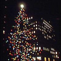 New York City views. Christmas tree at night