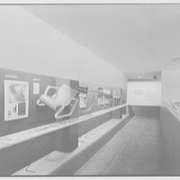 Museum of Modern Art, 11 W. 53rd St., New York City. Projection track