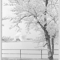 Jefferson Memorial. Left and front of Jefferson Memorial with blossoms and water I