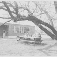 Becton Dickinson & Co., Rutherford, New Jersey. Picnic tables under willow tree