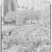 New York City views. Bryant Park chrysanthemums II