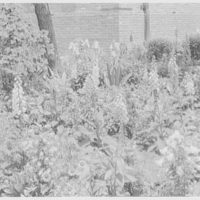 C.W. Post College, Brookville, Long Island. Flower garden II